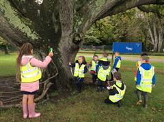 Primary 3 Shared Education Tree Leaves and Seeds in Donard Park