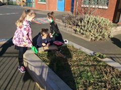 Habitats in Primary 2